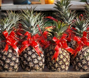 3669945-pineapples-decorated-with-red-ribbons